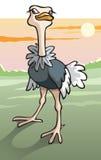 Ostrich in savanna. Flightless fastest bird, cartoon vector illustration Stock Image