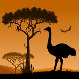 Ostrich. Royalty Free Stock Photo