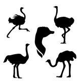 Ostrich set vector Royalty Free Stock Image