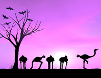 Ostrich Showing Courage. With a purple sunset. 3D render with some freehand work stock images