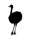 Ostrich Silhouette on White Background. Black and white   illustration Royalty Free Stock Images