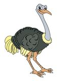 Ostrich sitting Royalty Free Stock Image