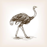 Ostrich sketch vector illustration Stock Photo