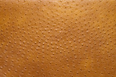 Ostrich skin. Genuine leather upholstery textured ostrich brown skin Royalty Free Stock Photography