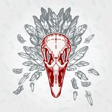 Ostrich Skull Vintage Aged Plumage Royalty Free Stock Photo