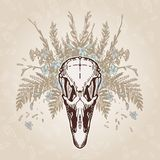 Ostrich Skull Vintage Aged Plumage Royalty Free Stock Image