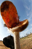 Ostrich smiling to camera Royalty Free Stock Image