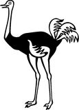 Ostrich. Stylized drawing of an ostrich Stock Photo