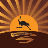 Ostrich in the sun. Royalty Free Stock Photos