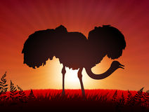 Ostrich on Sunset Background Royalty Free Stock Images