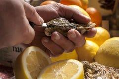 ostriche fotografie stock libere da diritti