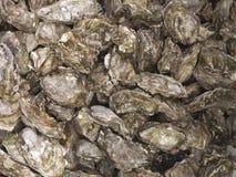 Ostriche da vendere i frutti di mare Immagine Stock