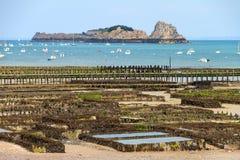 Ostriche di bassa marea di Cancale Fotografia Stock