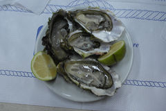 Ostriche oysters. Oysters seafood in the sea of ​​Gallipoli Italy Stock Photos