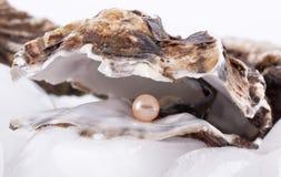 Ostriche su ghiaccio Fotografie Stock
