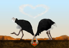 Ostriches vector illustration