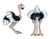 Ostriches  over white background Royalty Free Stock Photos