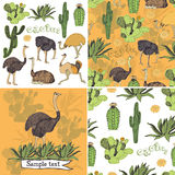 Ostriches set Stock Images