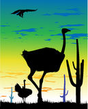 Ostriches in the steppe and eagle in the sky Royalty Free Stock Photos
