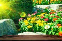 Ostrość kwiaty kwitnie w polu podczas lata z drewno stołem Obrazy Royalty Free