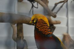 Ostrość na wałkoniącego się ptaku? zdjęcia stock