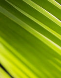 Ostrość na zielonym palmowym liściu przy Azja Obraz Royalty Free