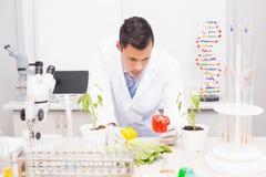Ostrość naukowiec egzamininuje pieprze obraz stock