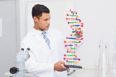Ostrość naukowiec patrzeje DNA helix Fotografia Royalty Free