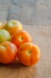 ostrość pomidory selekcyjni stołowi Zdjęcia Royalty Free