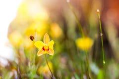 Ostrości zakończenie kolorów żółtych kwiatów roślina z bokeh Obrazy Royalty Free