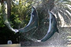 ostrożnie wprowadzać butelka delfin Zdjęcia Royalty Free