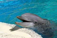 ostrożnie wprowadzać butelka delfin Obrazy Stock