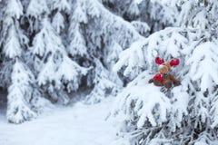 ostrożnie wprowadzać czerwony reniferowy Rudolph zdjęcia stock