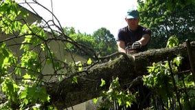 Ostrożny woodcutter ciie drzewnego bagażnika powalać na parka ogrodzeniu zbiory