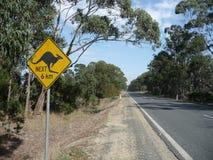 ostrożny kangur Fotografia Royalty Free