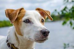 Ostrożny spojrzenie pies zdjęcie stock