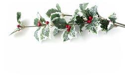 Ostrokrzewu aquifolium - Sztuczna holly gałąź z owoc Fotografia Stock