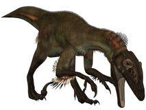 ostrommayorumutahraptor för dinosaur 3d Royaltyfri Foto