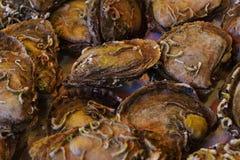 Ostron i fiskmarknad på Istanbul, Turkiet Arkivbild