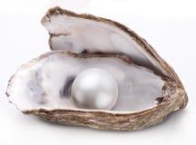 Ostron med den isolerade pärlan royaltyfria bilder