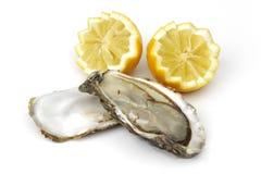 Ostron och citron arkivbilder