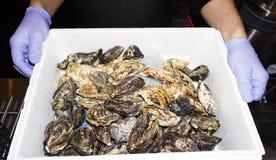 Ostron på is i en ask En gruppering av nya ostron för en restaurang royaltyfria bilder