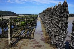 Ostronbanker på stranden i Brittany France Europe royaltyfri bild