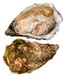 ostronen pryder med pärlor white Royaltyfria Foton