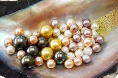Ostronskal med Mång--färg pärlor Royaltyfria Bilder
