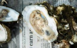 Ostronstek med rå ostron på halva Shell arkivbilder
