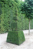 Ostrosłupowy drzewo Zdjęcia Stock