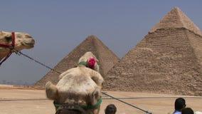 Ostrosłupy Giza z wielbłądem w przedpolu zdjęcie wideo