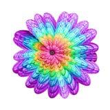 Ostrosłupa kwiat Obrazy Royalty Free