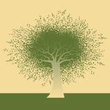 Ostry Nutowy drzewo Obrazy Royalty Free